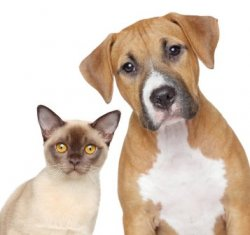 Dog and Cat Hair and Dander