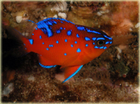 Cool wildlife to see on scuba diving trips