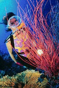 Walindi PNG Diving