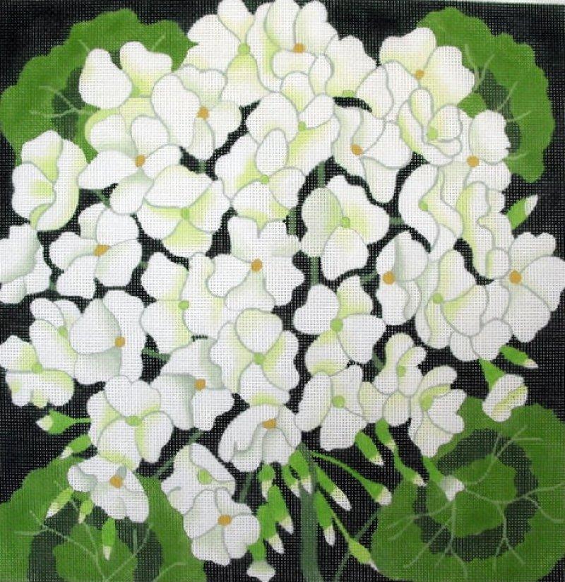 Giant White Geranium
