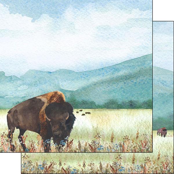Buffalo/Bison watercolor