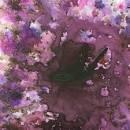 Infusions Dye - Violetta