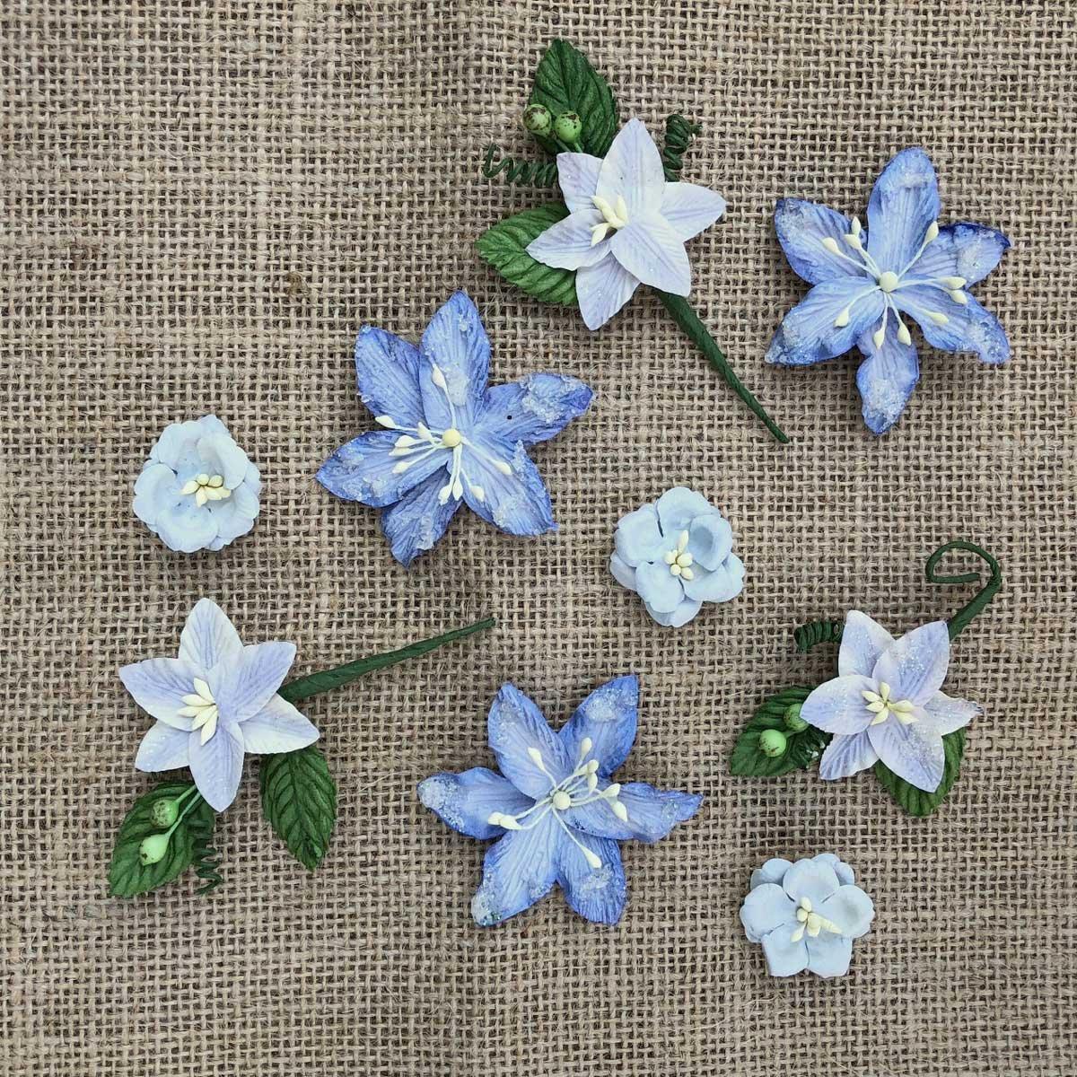 Stargazers Flowers - Periwinkle