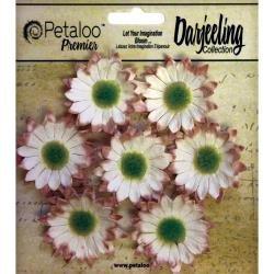Darjeeling Mini Daisy - Cream