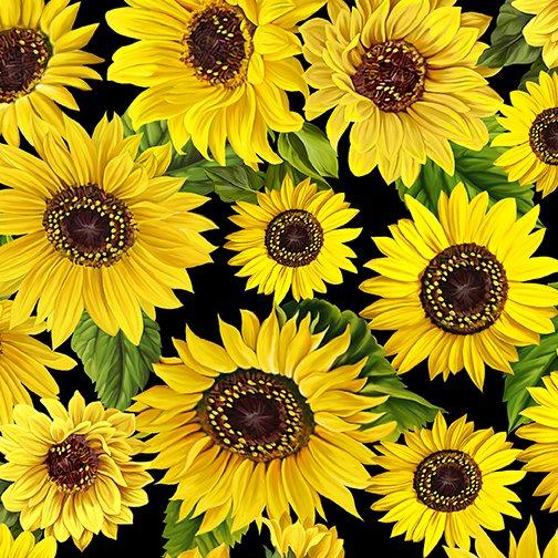 Sunflower Meadow Black (Sunflower Sunrise)