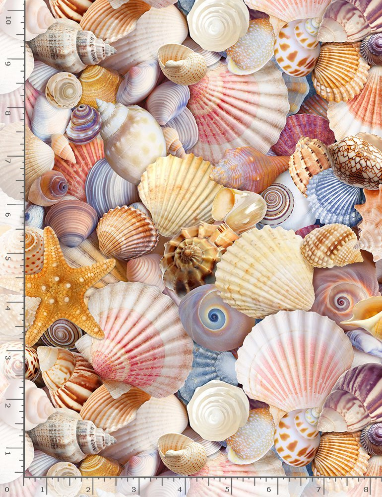 ASSORTED PACKED BEACH SHELLS