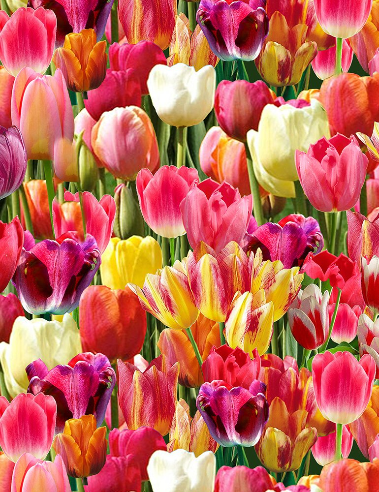 PACKED TULIPS