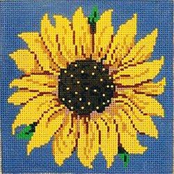 Sunflower on blue background