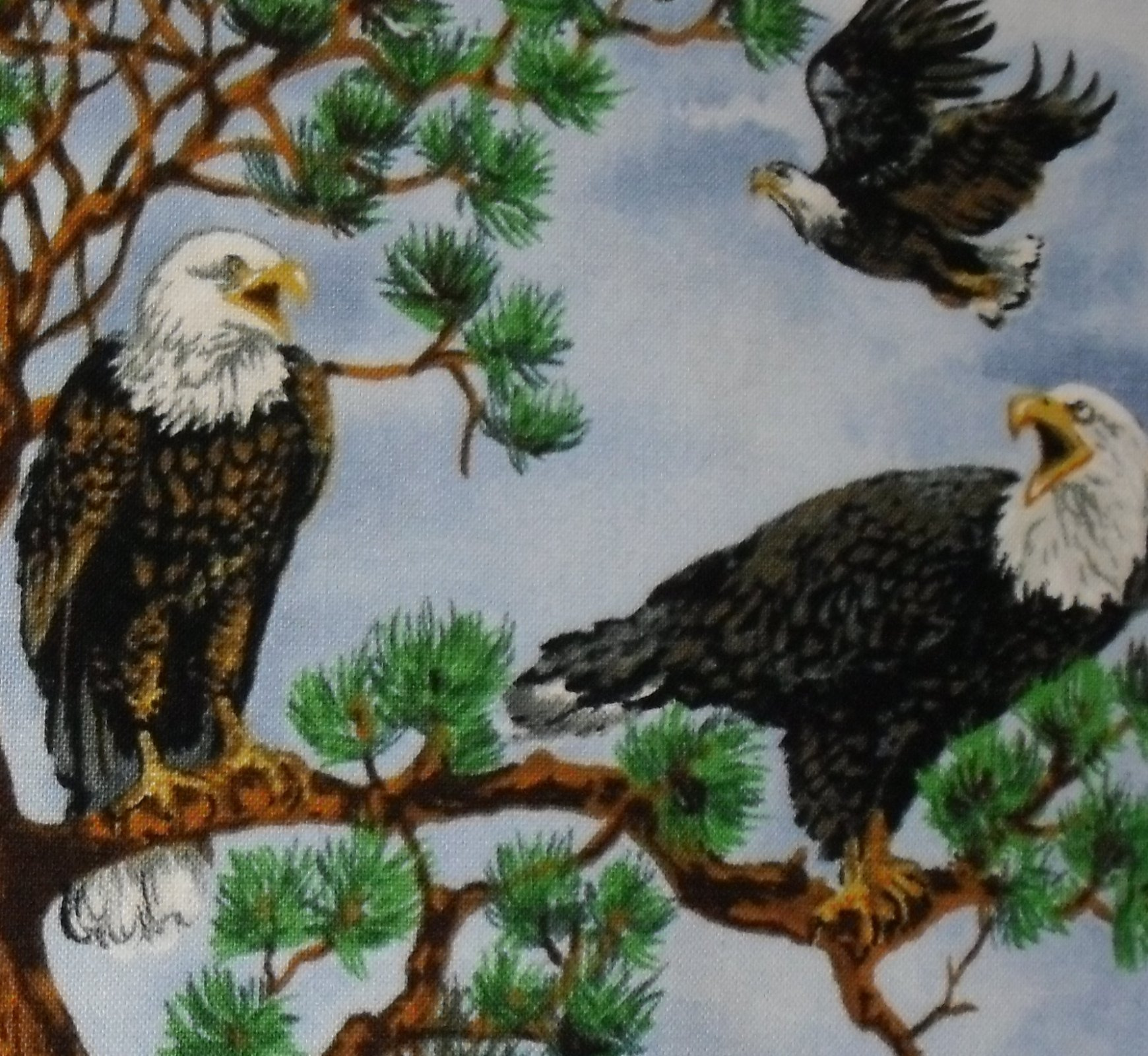 Birds of a Feather Blank Quilting 6200-sky