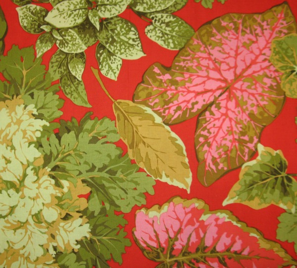 Large leaves on red