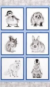 Animal Kingdom  AHF-17591-304