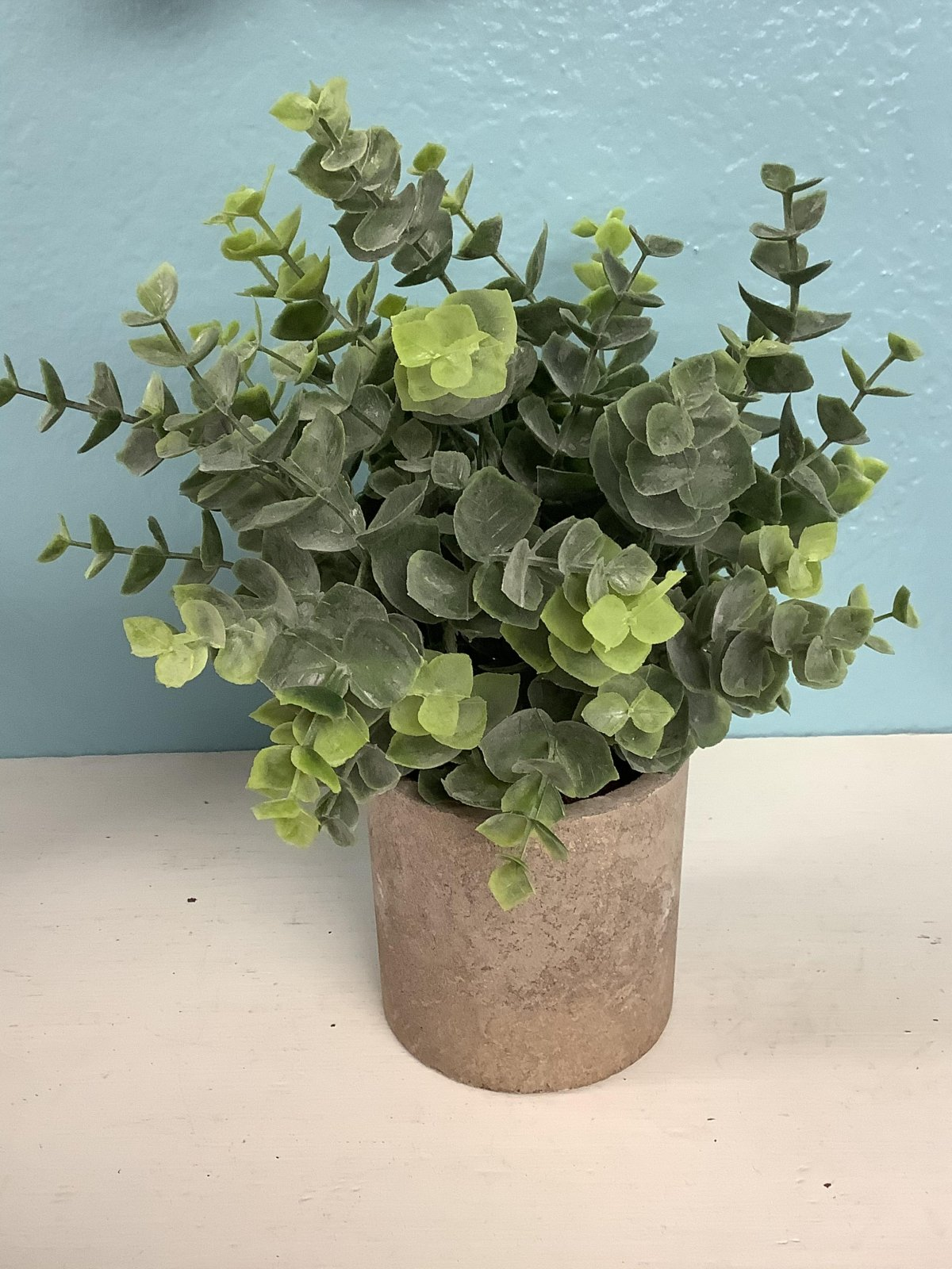 """Succulent (Approximately 9"""" tall)"""