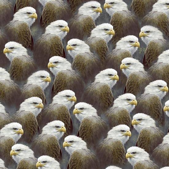 Majestic Eagles Portraits QT 24324-K
