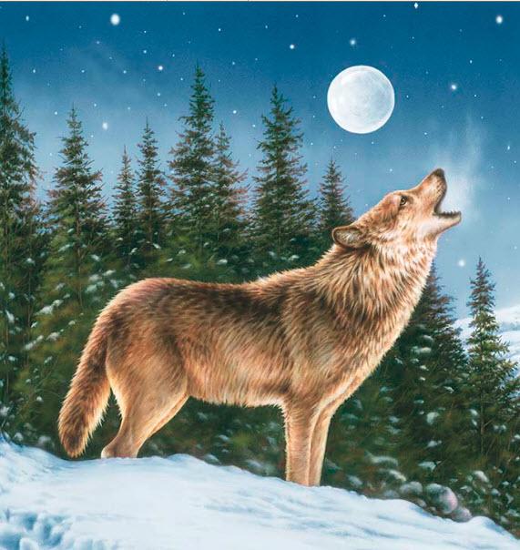 Majestic Wolf Panel Digital P20 PR PD 5570 Wolf