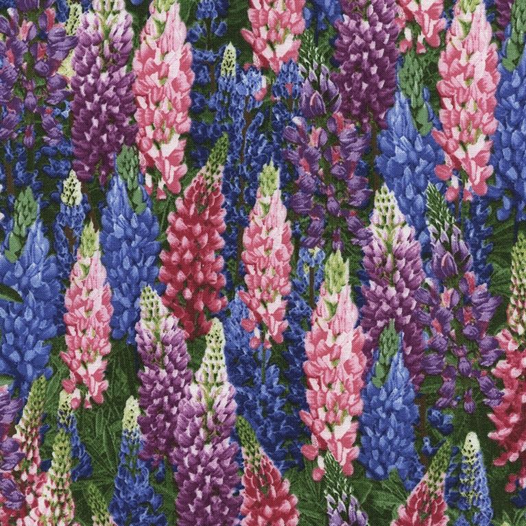 Lupine Flowers TT C 4948 Lupine