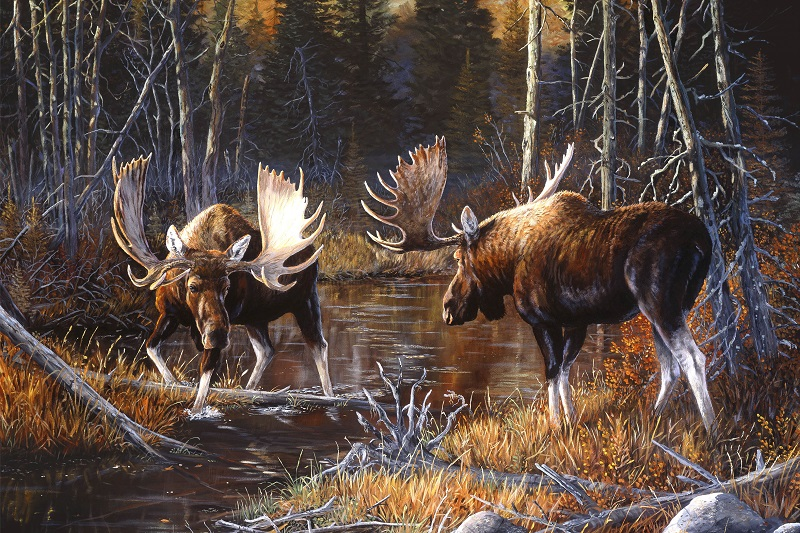 Panel Majestic Moose P71 21825-36