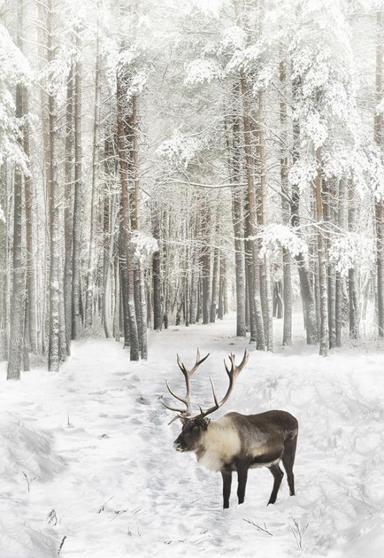 Reindeer-Caribou Panel P48 H R 4562-15 Powder