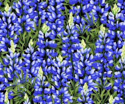 Sow Much Lupine H8722-7 Blue