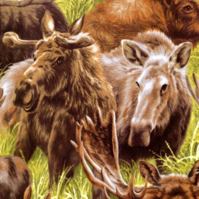 Moose FQ 112 11841