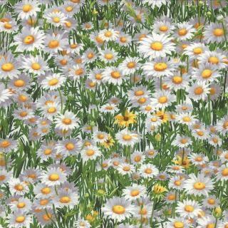 Wildflowers VI M 32814-11 Spring