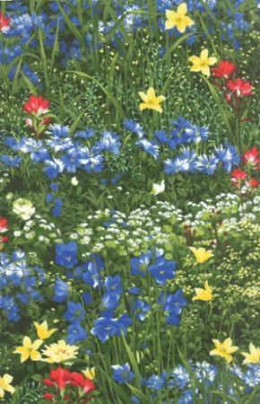 Wildflowers VII M 32970-11 Spring