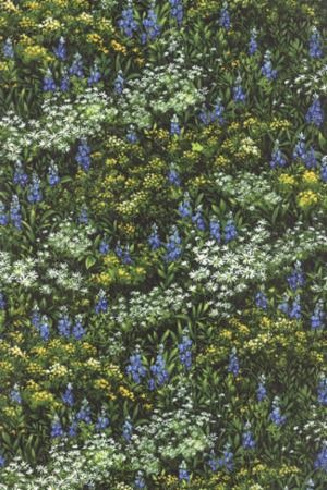 Wildflowers VII M 32971-14 Summer