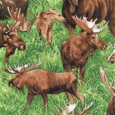 Moose in Grass FQ 122 29491