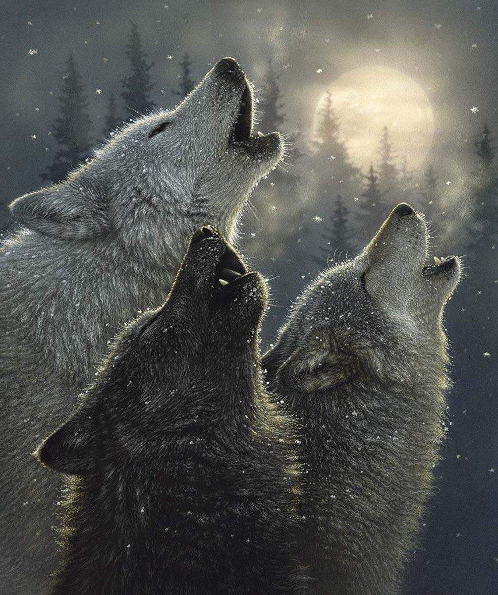 Riley Blake - Wild & Playful Wolves Panel/Digital - P7821-WOLVES - A-3