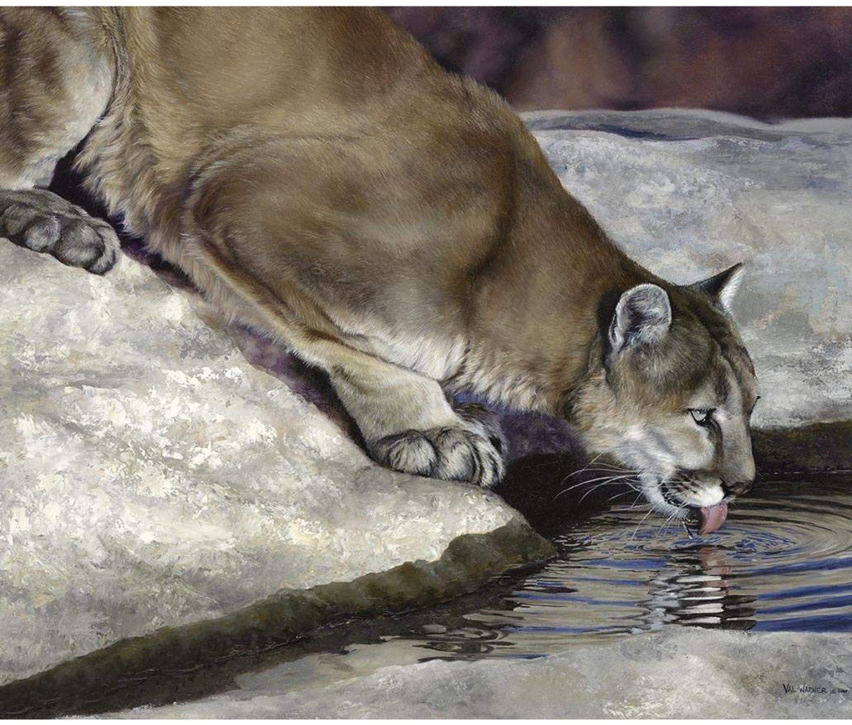 Riley Blake - Wild & Playful Cougar Panel/Digital - P7822-COUGAR - A-2