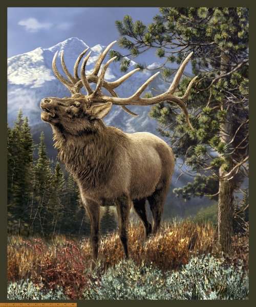 Windham - Mountain Elk-Panel/DIGITAL - 50902P - A-5