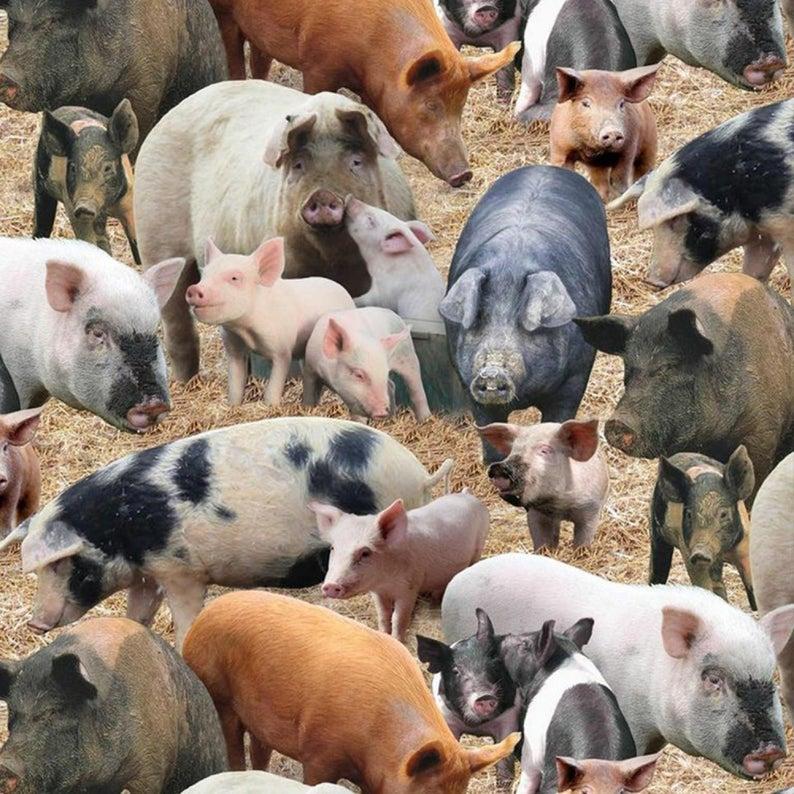 Elizabeths Studio - Farm Animals - Pigs - Brown - Fabric by the Yard 431E-BRN