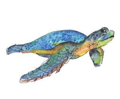 AN063 Sea Turtle