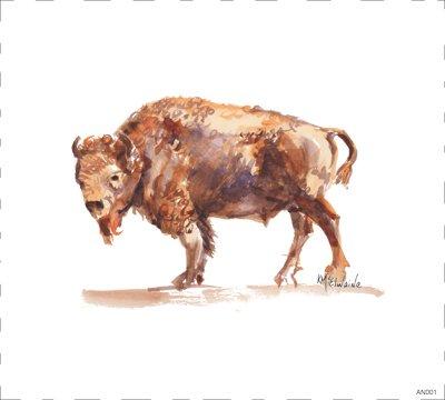 Woodland Bison Buffalo AN001