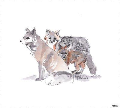 Woodland Fox  AN003