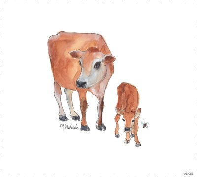 Cow AN065