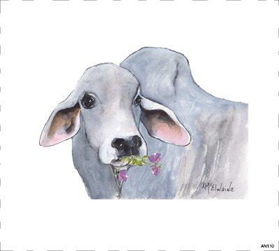 Cow AN110