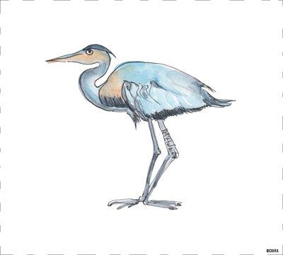 Bird BD053