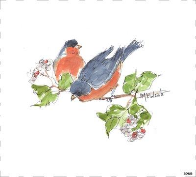 Bird BD123
