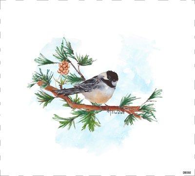 Bird DE032