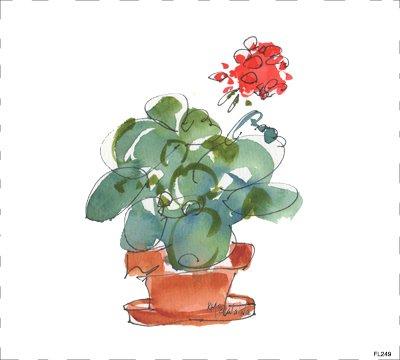 Flower Geraniums FL249