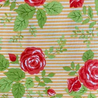 rose and stripe in orange
