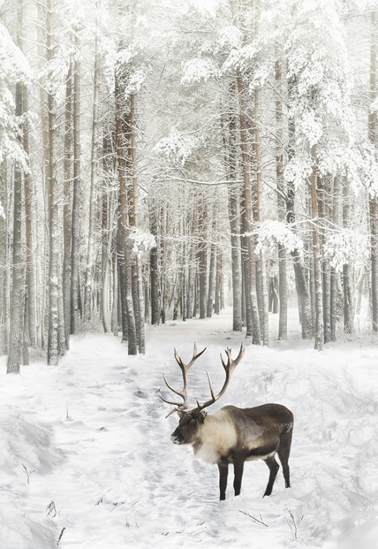 Call of the Wild Caribou in the White Snow