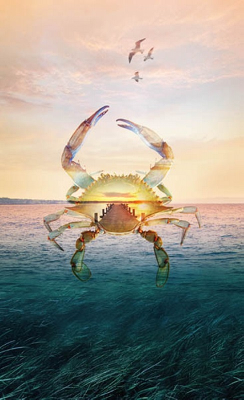 Call of the Wild: Crab over the Sea Panel by Hoffman Digital