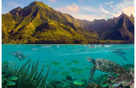 Call of the Wild: Hawaiian Sea Turtle Panel by Hoffman Digital