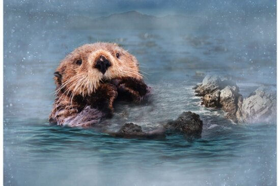 Call of the Wild: Sea Otter Panel by Hoffman Digital