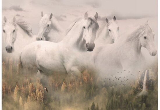 Call of the Wild: White Horses at Dawn Panel by Hoffman Digital