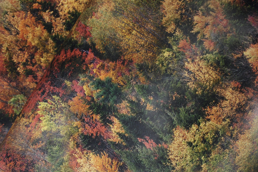 Fall Colors on Trees: Call of the Wild for Hoffman