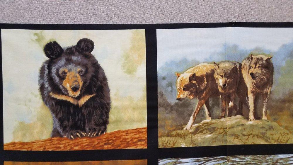 Nature Studies - USA (North American Wildlife) by Robert Kaufman