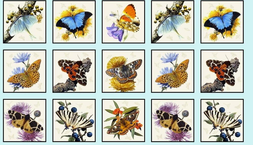 Butterflies and Moths on Blue by Elizabeth's Studios