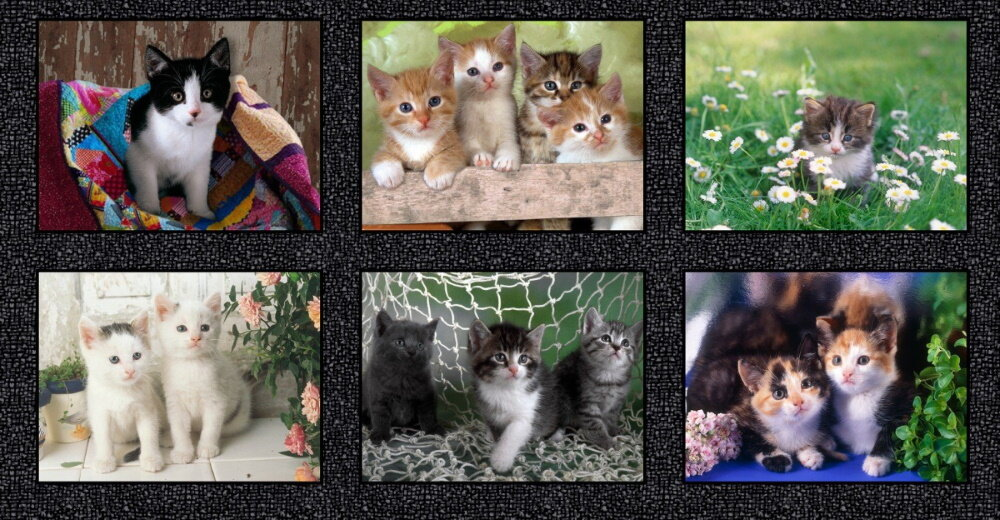Somebody to Love - Kittens - Digitally Printed by Whistler Studios for Windham Fabrics